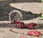 Click para ver donde esta este adorable ratón